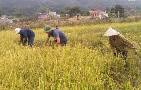 Bao chech len phia bac, do bo Quang Ninh - Lang Son - Anh 2