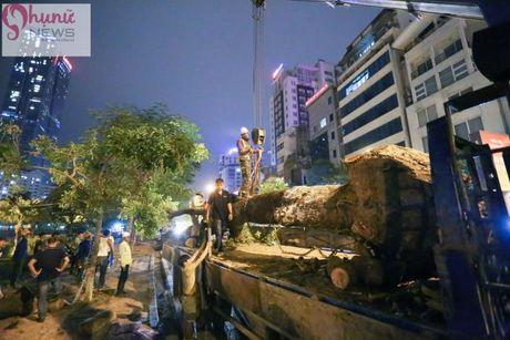 Ha Noi: Trong ngay dau danh chuyen cay xanh tren tuyen pho Kim Ma - Anh 10