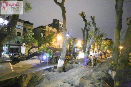 Ha Noi: Trong ngay dau danh chuyen cay xanh tren tuyen pho Kim Ma - Anh 12