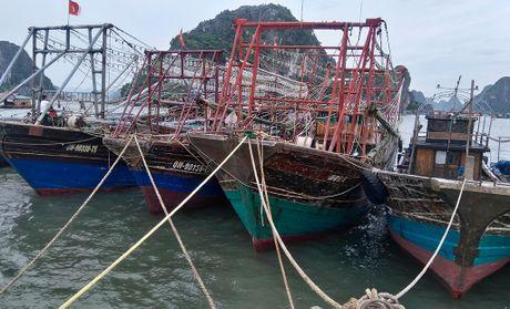 Bao vao Hai Phong, Quang Ninh - Anh 2