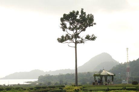Vuon nho trong nhu ngoai o chau Au o Pattaya - Anh 10