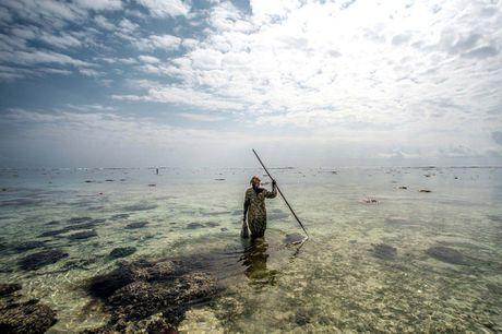 Nhung tho san bach tuoc o Zanzibar - Anh 10