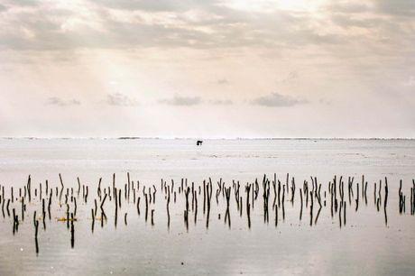 Nhung tho san bach tuoc o Zanzibar - Anh 11