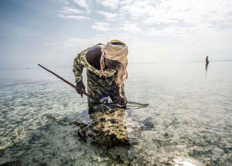 Nhung tho san bach tuoc o Zanzibar - Anh 3