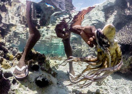 Nhung tho san bach tuoc o Zanzibar - Anh 4