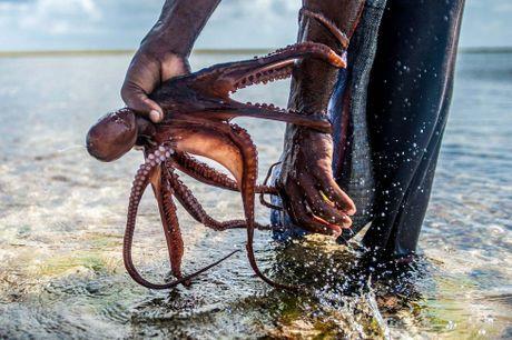 Nhung tho san bach tuoc o Zanzibar - Anh 6