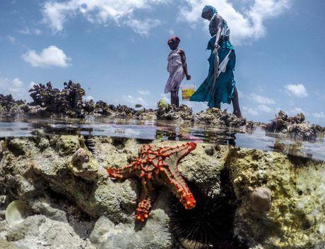 Nhung tho san bach tuoc o Zanzibar - Anh 8