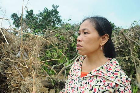 Sau lu, dac san buoi Phuc Trach thanh cui kho - Anh 1