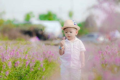 Me man canh dong hoa bao la voi bay cuu xinh xan giua long Ha Noi - Anh 3