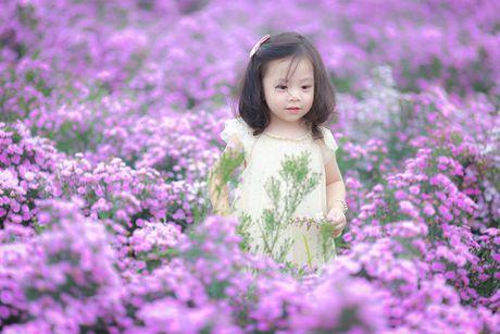 Me man canh dong hoa bao la voi bay cuu xinh xan giua long Ha Noi - Anh 4