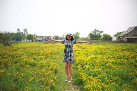Me man canh dong hoa bao la voi bay cuu xinh xan giua long Ha Noi - Anh 5