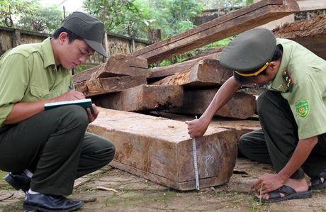 Quang Tri: Thieu go lam nha, 4 ho dan vao rung don ha go trai phep - Anh 1