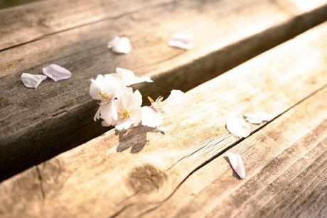Luan ve hoa rung - Anh 1