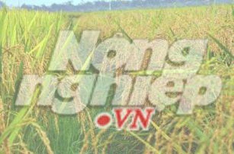 Khanh Hoa: SX nong, lam nghiep, thuy san tang truong nhe - Anh 1