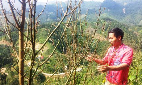 Rung minh canh sau rom tan pha hang tram hec-ta que tai Yen Bai - Anh 9