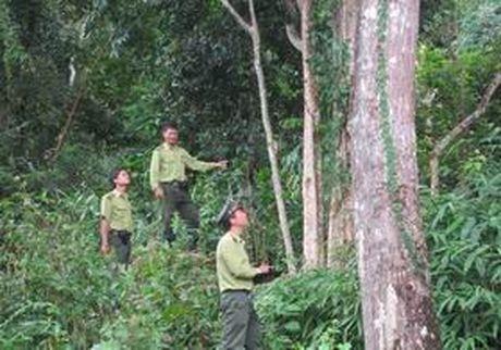 Du thao Luat Bao ve va Phat trien rung (sua doi) - Anh 1