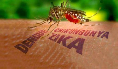 Tang cuong giam sat dich benh do virus Zika tai TP.HCM - Anh 1
