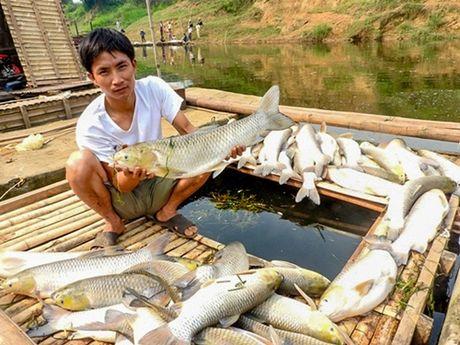 Bo luat To tung hinh su 2015: Cac bien phap cuong che doi voi phap nhan - Anh 1