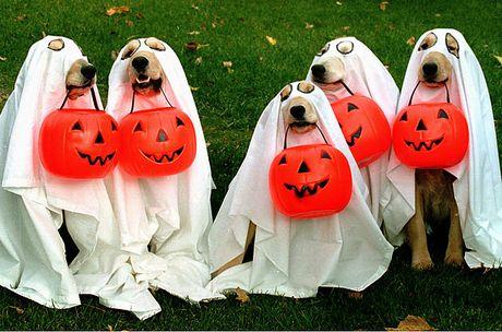 Nhung con so an tuong ve le hoi Halloween - Anh 5