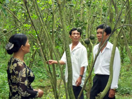 Nong dan nguoi Khmer san xuat gioi - Anh 1