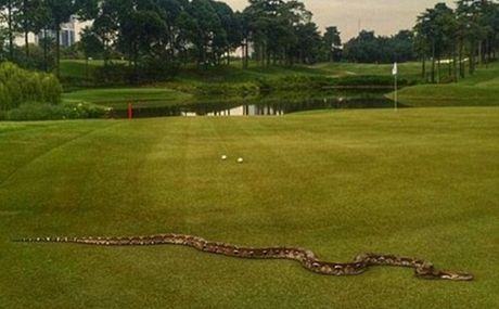 Tran dai hai met quay roi giai golf o Malaysia - Anh 1