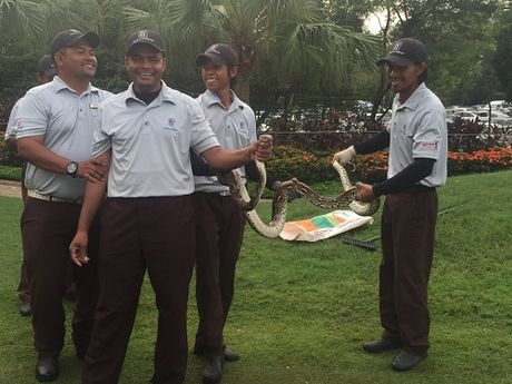 Tran dai hai met quay roi giai golf o Malaysia - Anh 2