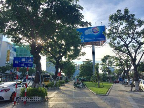 Da Nang: Dia phuong dau tien mua bao hiem cho cay xanh - Anh 1