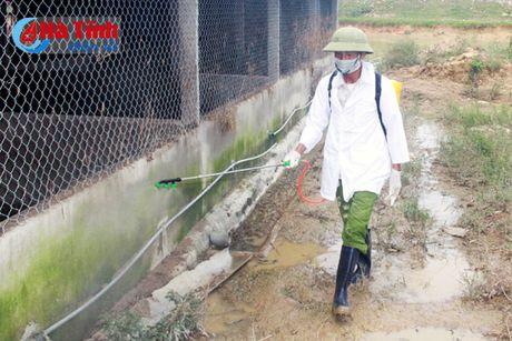 Cam Xuyen phong benh cho gia suc, gia cam sau lu - Anh 1