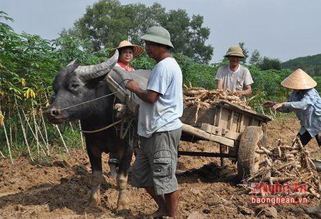 Thanh Chuong phat trien vung nguyen lieu san - Anh 1