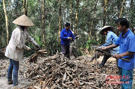 Thanh Chuong phat trien vung nguyen lieu san - Anh 2