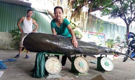 Bat duoc ca tra dau nang 130 kg tren song Serepok - Anh 1