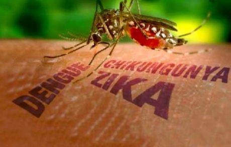 Tang cuong phong, chong dich benh Zika va sot xuat huyet trong truong hoc - Anh 1