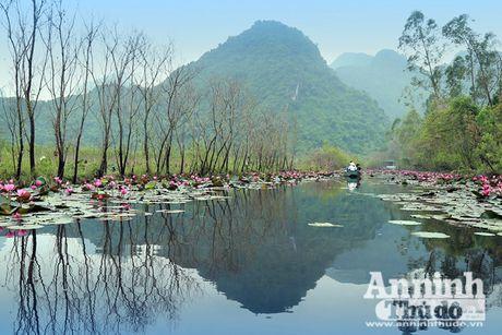 Dam chim tien canh suoi Yen mua hoa sung bung no - Anh 1
