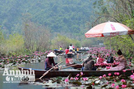 Dam chim tien canh suoi Yen mua hoa sung bung no - Anh 5