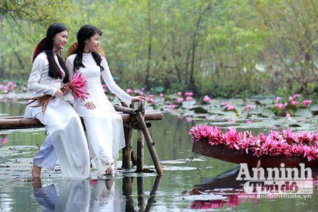 Dam chim tien canh suoi Yen mua hoa sung bung no - Anh 7