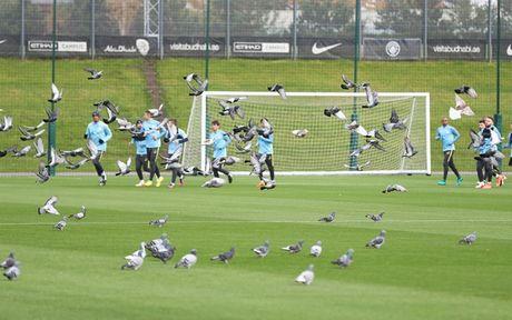 Chim bo cau 'pha dam' Man City truoc them derby Manchester - Anh 1