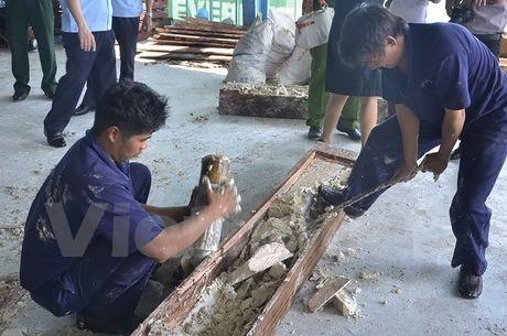 Thanh pho Ho Chi Minh bat lo hang gan 1 tan nga voi giau trong go - Anh 2