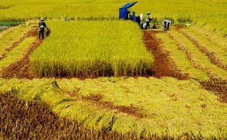 Nong nghiep moi chi chiem 1% von FDI vao Viet Nam - Anh 1