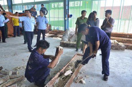 Tp. Ho Chi Minh phat hien gan 1 tan nga voi giau trong go - Anh 2