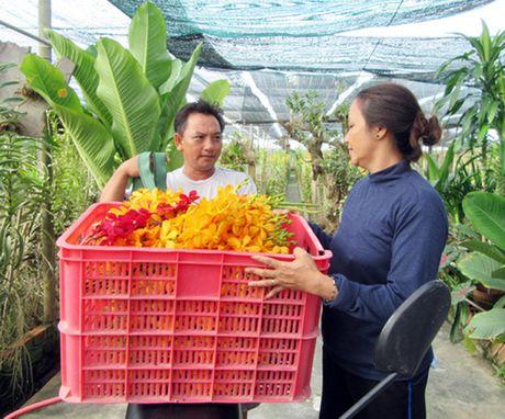 Lam giau nho hoa lan Mokara - Anh 1
