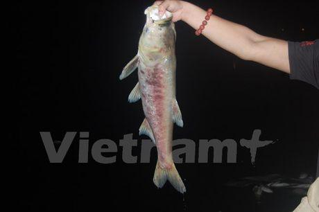 Ca chet dat vao bo dai ca cay so o ho Linh Dam - Anh 3