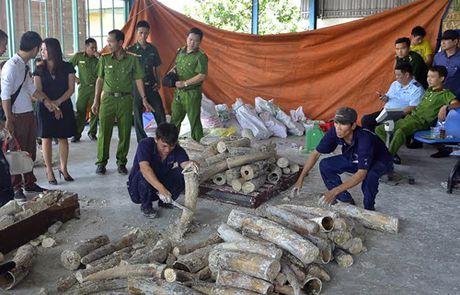Lien tuc bat giu cac vu nhap lau nga voi ve Viet Nam - Anh 1