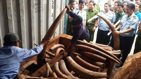 Lien tuc bat giu cac vu nhap lau nga voi ve Viet Nam - Anh 2