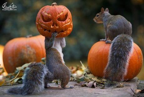 Nhung hinh anh Halloween de thuong den kho tin - Anh 9