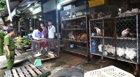 TP.HCM van con 130 diem kinh doanh gia cam song trai phep - Anh 1