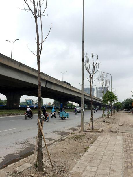 Thong tin chinh thuc vu cay moi trong chet kho hang loat tren duong Nguyen Xien - Anh 1