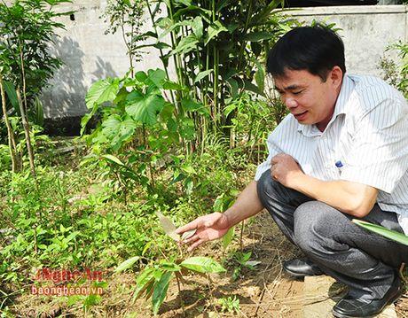 Xa Chau Khe (Con Cuong): Giu vung chat luong chuan Quoc gia ve y te - Anh 3