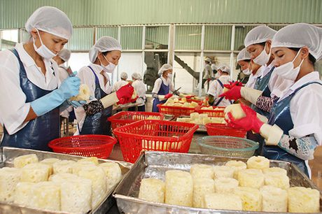 Hon 400 doanh nghiep tham gia Vietnam Foodexpo 2016 - Anh 1