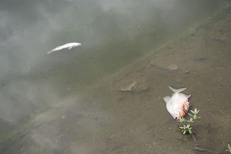 Ha Noi: Nguoi dan bang hoang khi ca chet trang o ho Linh Dam - Anh 3