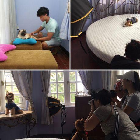 Bed and Pet first - khach san chuan 5 sao cho thu cung - Anh 7